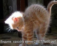 Gallery.ru / Фото #2 - 1 - Ka