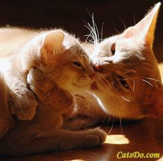 Adorable Abyssinian Cats  -  Absolutely gorgeous and heartwarming picture of an adorable Abyssinian mother and daughter  |  catsdo.com