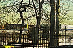 Mark Fisher's World Of Photography ™: Trees In The Winter • American Photographer Mark F...