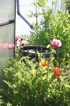 Regenwasser sammeln vom Gewächshaus. Html, Plants, Rainwater Harvesting, Rain Water Collector, Terrace Garden, Shade Perennials, Indoor House Plants, Nature, Plant