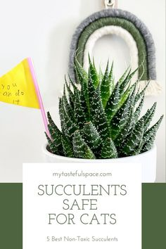 The best non-toxic succulents that are cat friendly. #succulents #nontoxicplants #succulentssafeforcats #catsafesucculents #catfriendlysucculents #nontoxicsucculents