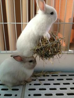 🐇The Rabbit gift idea guide - How to choose a gift for a bunny lover! Cute Baby Bunnies, Funny Bunnies, Cute Babies, Cute Little Animals, Cute Funny Animals, Cute Bunny Pictures, Rabbit Pictures, Bunny Pics, Funny Pictures