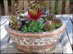 """According to the blog post: Sempervivium """"Commander Hay"""" at focal point; the other sempervivums include 'Icicle' (left) and 'Red Rubin' (right). A bit of blue sedum (center) from my garden was added for variety."""