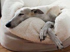 Kostenloses Nähanleitung: Nur das Beste für den besten Freund des Menschen, Hundekuschelsack selbst nähen / free diy tutorial: sewing a cushion for dogs via DaWanda.com