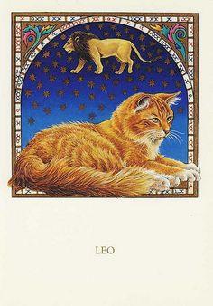 FRANCIEN VAN WESTERING - LEO CAT