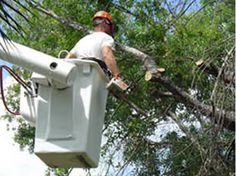 West Coast Tree Service Reduces Or Eliminates The Risk Of Affectation To Disaster Removal