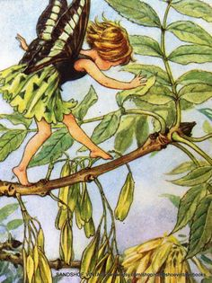 1930s ASH TREE FAIRY Cicely Mary Barker by sandshoevintageprint