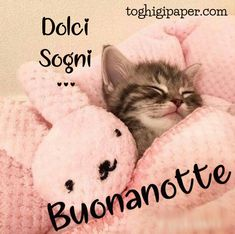 Good Night, Good Morning, Italian Quotes, Love You, Teddy Bear, Cute, Anime, Crassula Ovata, Peanuts