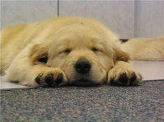 Sleeping puppy...awe