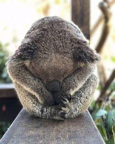 """97.9 ezer kedvelés, 954 hozzászólás – Australia (@australia) Instagram-hozzászólása: """"""""Wake me up when Monday's over..."""" - That all too familiar feeling at the start of the week 😴…"""""""
