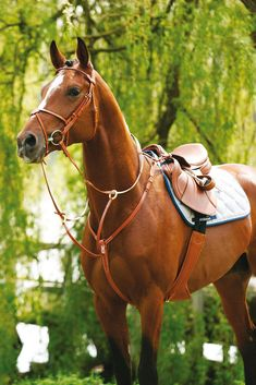 Why do you think is it essential to consider the proper suggestions in acquiring the equestrian boots to be utilized with or without any horseback riding competitors? Cute Horse Pictures, Beautiful Horse Pictures, Beautiful Horses, Animals Beautiful, Cute Horses, Pretty Horses, Horse Love, Horse Gear, Horse Tack