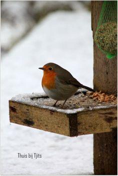 Thuis bij Tjits: Wintersfeer... Robin, Winter, bird, snow, cute, nuttet, rødkælk på roderbrædt, photo