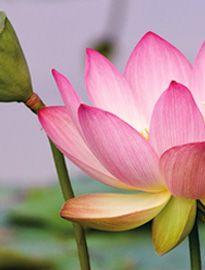Elgáncsoltam magam, segítség! | Integrál Intézet Plants, Plant, Planets