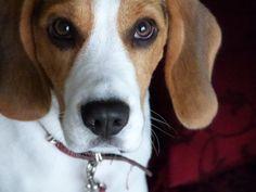 Der spontane Blickkontakt zur Ihrem Hund kann mit ein paar Tricks förderlich für die Hundeerziehung sein