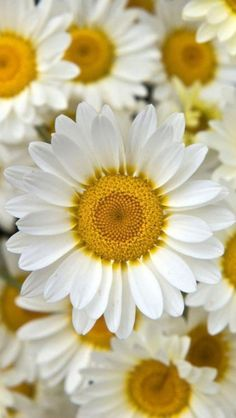 growing some daisies for my great grandmother this year.