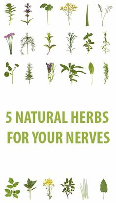 ,5 natural herbs for your nerves