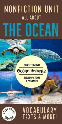 Facts about ocean an
