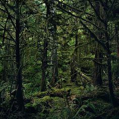 "Jason Frank Rothenberg, ""Quinault (Interior #1),"" c-print"