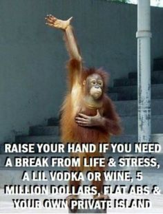 Top 60 Funny Memes And Hilarious Sayings 50 - Funny Monkeys - Funny Monkeys meme - - Top 60 Funny Memes And Hilarious Sayings 50 The post Top 60 Funny Memes And Hilarious Sayings 50 appeared first on Gag Dad. Funny Shit, Haha Funny, Funny Jokes, Hilarious Sayings, Funny Stuff, Funny Monkey Memes, Monkey Humor, Funny Memes For Him, Sarcastic Quotes