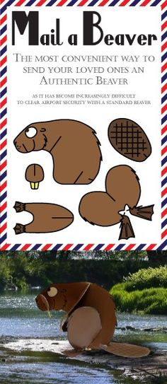 Mail a Beaver Novelty Postcard available on ETSY https://www.etsy.com/shop/greenbananacards