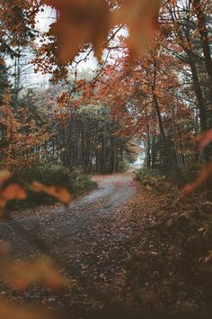 lovey fall views. Autumn Cozy, Autumn Feeling, Autumn Rain, Autumn Leaves, Autumn Scenery, Autumn Aesthetic, Fall Wallpaper, All Nature, Autumn Nature