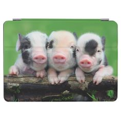 Shop Three little pigs - cute pig - three pigs postcard created by RedSamurais. Personalize it with photos & text or purchase as is! Cute Baby Pigs, Cute Piglets, Cute Baby Animals, Cute Babies, Farm Animals, Funny Animals, Dachshund Facts, Pig Showing, Fluffy Cows