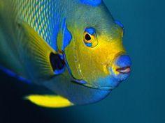 Image Search Results for tropical fish Underwater Creatures, Underwater Life, Ocean Creatures, Pretty Fish, Beautiful Fish, Saltwater Aquarium, Aquarium Fish, Colorful Fish, Tropical Fish