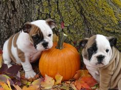 Fall puppies :)