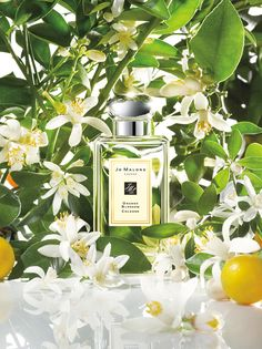 I know you don't like fragrance, but this one is sooooo wonderful! Looooovvveee it! It's like tuberose and pikake but not overwhelming. Jo Malone™ Orange Blossom Cologne