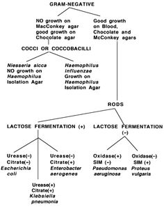gram negative bacilli flowchart | Click on Gram Negatives to determine how and when to perform the tests ...