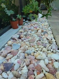 Seashells mulch