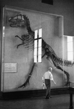 T-rex. It's amazing to think these existed at one point on earth..beautiful creatures they must have been!
