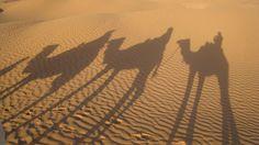 For when I FINALLY ride the Sahara