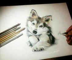 Drawing of a dog colored pencil art Amazing Drawings, Realistic Drawings, Beautiful Drawings, Colorful Drawings, Cute Drawings, Dog Drawings, Pencil Drawings, Colored Pencil Artwork, Color Pencil Art