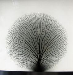 lelongdutemps:  Lighting field (detail) Hiroshi Sugimoto ©kyorei