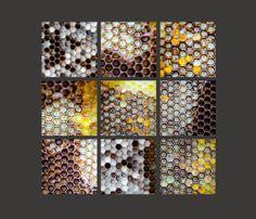Honeycomb Macros. Beekeeping. Apiary. Honeybees. Nature Photography. Set of nine 4x4 Prints by OneFrameStories on Etsy, $56.00