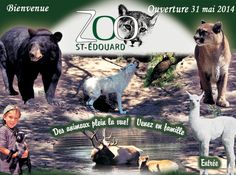Zoo St-Édouard Centre, Movie Posters, Movies, Camping, Places, Wild Life, Vacation, Animaux, Campsite