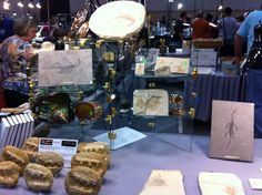 Some of the amazing fossils for sale at the Huntsville Gem and Mineral Show. This year the show is Oct. 11-13 at the Von Braun Center. www.huntsvillegms.org.