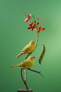 Bird Supplies Bird Leg Rings 3mm Finches Canaries