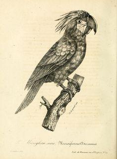 t.1=pt.1-2 (1834) - La galerie des oiseaux - Biodiversity Heritage Library