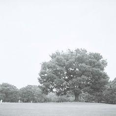 """"""" like a tree """""""