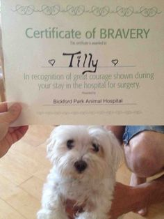Our little Tilly got an award for bravery at the vet (cross post from aww)