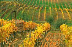 Il chianti, Toscana, Italy