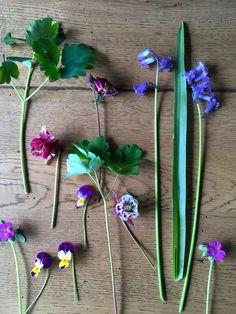 Flowers from my Garden in Spring - Bumpkin Hill