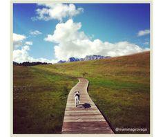 Mucchino tra i pascoli sull'Alpe di Siusi