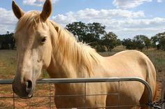 brumby - Google Search