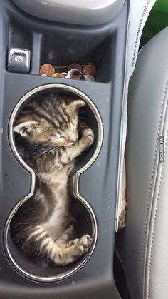 cup holder or cat holder?? That's her favorite spot in the car. she feels safe... so sweet.