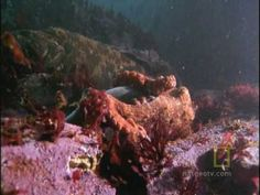 octopus kills a shark (fast forward to about 1:40 to see the action). woah nature!
