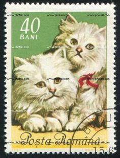 http://www.photaki.com/picture-poststamp-cat_1225083.htm