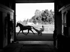 Mike Jarvis jogs a horse around the track at Sam Mignano Farm in Monroe, Michigan. The farm takes part in harness racing in Michigan and Ohio and is home to many championship horses.  Photo Credit: Kirsten Kearse